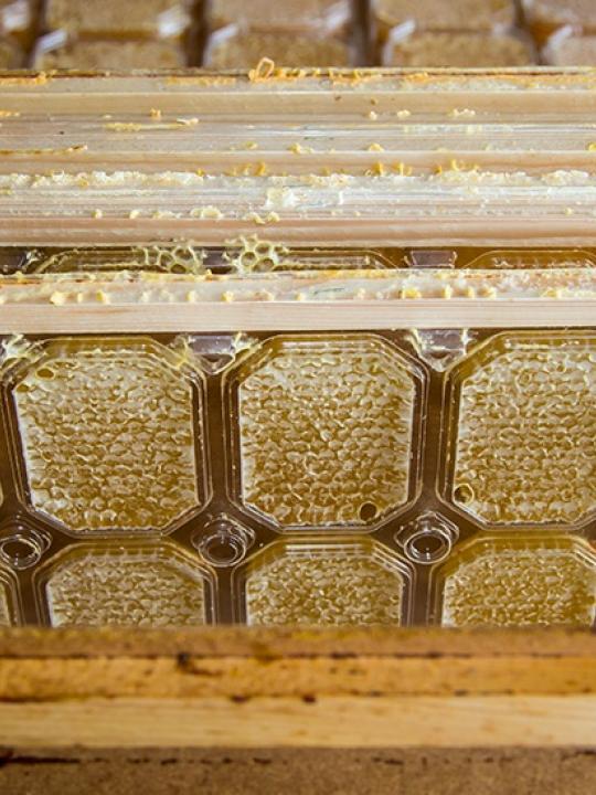 Мёд в сотах (блистер)